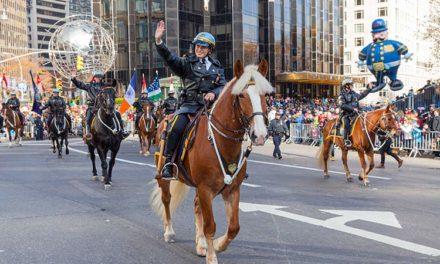 Horses in Uniform