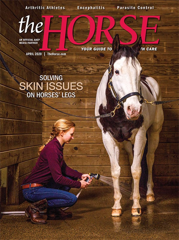 The Horse Magazine: Current Issue