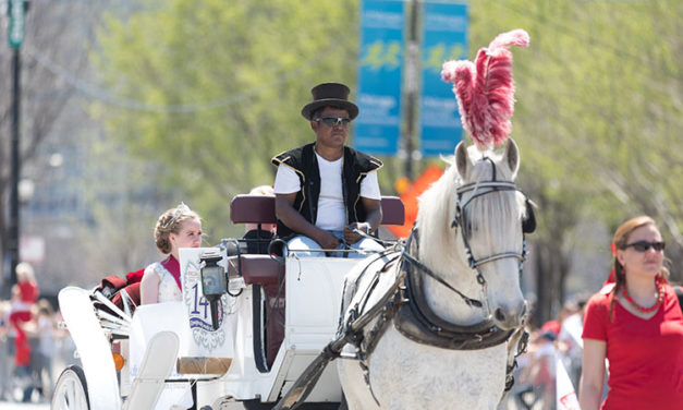 Chicago City Council Bans Horse-Drawn Carriages