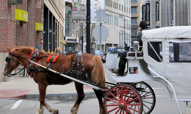 Chicago Considers Ordinance to Ban Horse-Drawn Carriages