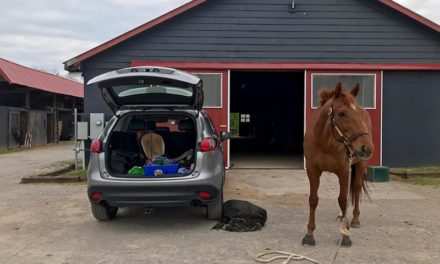 Enduring COVID-19 Changes as a Horse Owner Who Boards