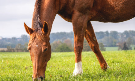 Why Do Horses Need Vitamin E?