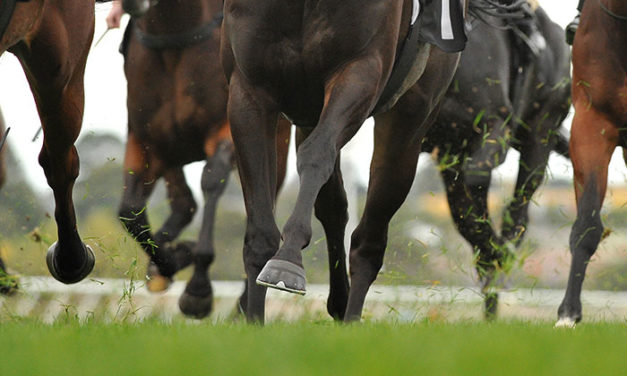 3 Biomarkers Linked to Catastrophic Injuries in Racehorses
