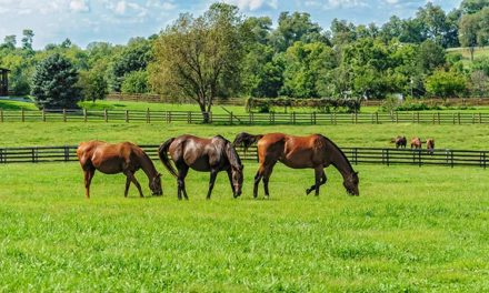 Vitamin E Helps Keep Horse Muscles Healthy