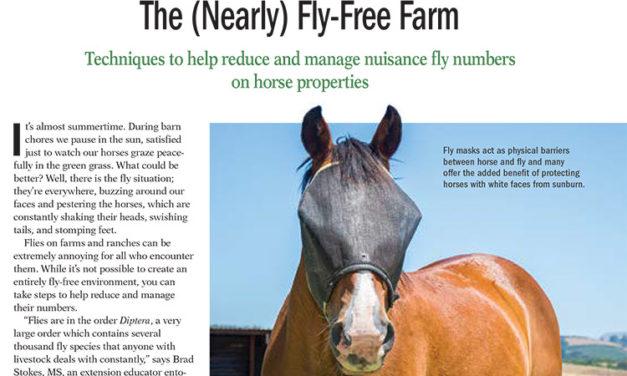 The Nearly Fly-Free Horse Farm