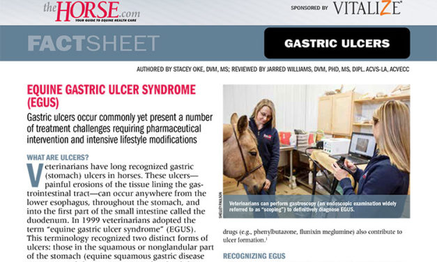 Fact Sheet: Gastric Ulcers