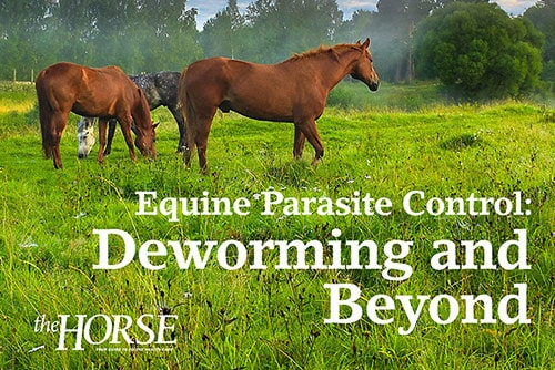 Equine Parasite Control: Deworming and Beyond