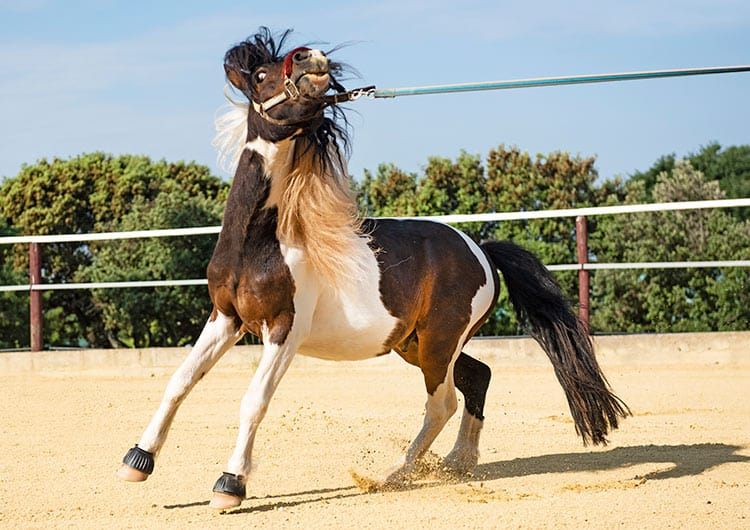 Calming Horses: Education and Options