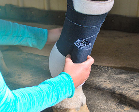 Equine Wound Care Done Right