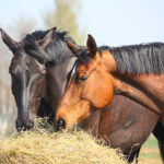 Forage-First Diets for Horses