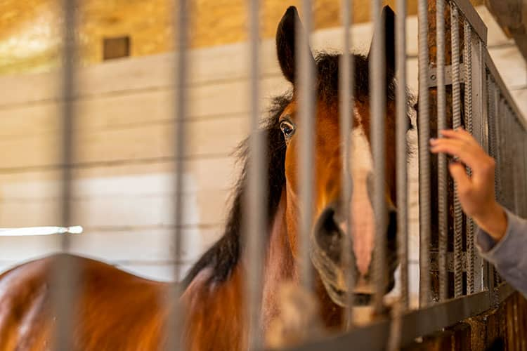 Does Your Horse Need a Low-Starch Diet?