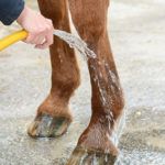Can Cold Therapy Safeguard Sport Horses From Injury?