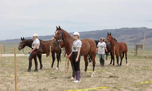 Trail's Open: Endurance Riders Hit the Trail After COVID-19 Lockdown