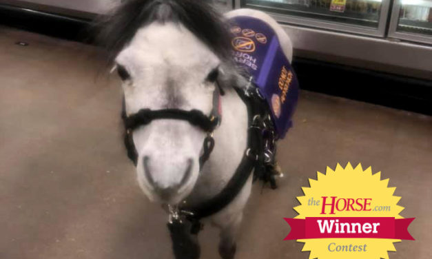 The Horse Announces 'My Horse is Worth Protecting' Winner