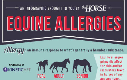 Infographic: Equine Allergies