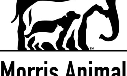 Morris Animal Foundation Calls for Equine Behavior Research Proposals