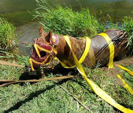 Riverside Rescue: Pulling a Mare to Safety on the Deschutes