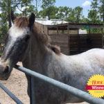 <em>The Horse</em> Announces 'Say Neigh to Sunburn' Contest Winners