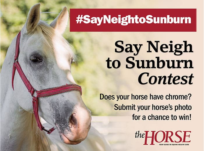 Enter The Horse's 'Say Neigh to Sunburn' Contest