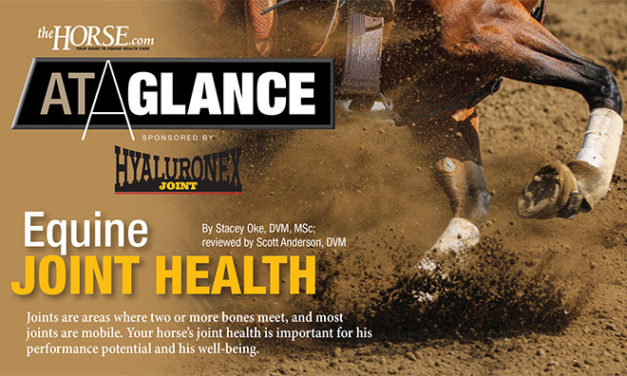 At A Glance: Equine Joint Health