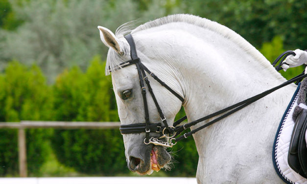 Bits, Bridles, and Equine Welfare
