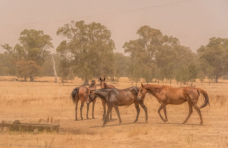Wildfire Season and Feeding Horses for Lung Health