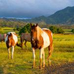 The Island Horse Life