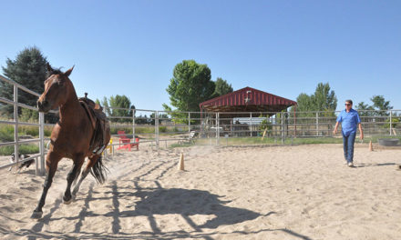 Building a Round Pen on Your Horse Property