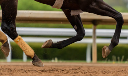 Equine Innovators: Racetrack Surfaces With Dr. Mick Peterson