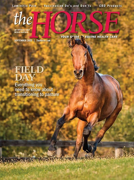 The Horse: September 2020 issue
