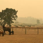 Can Wildfire Ash Make Pastures Unsafe for Horses to Eat?