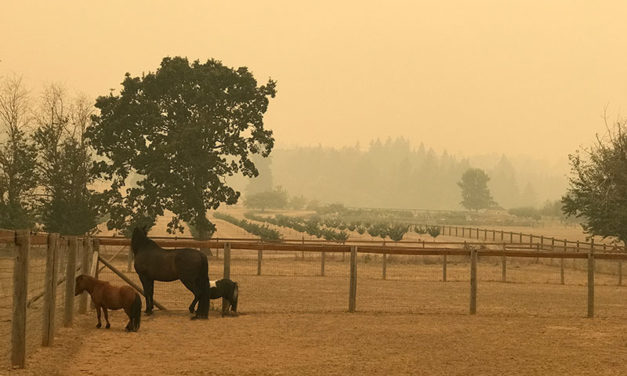 Helping Horses Cope With and Recover From Poor Air Quality