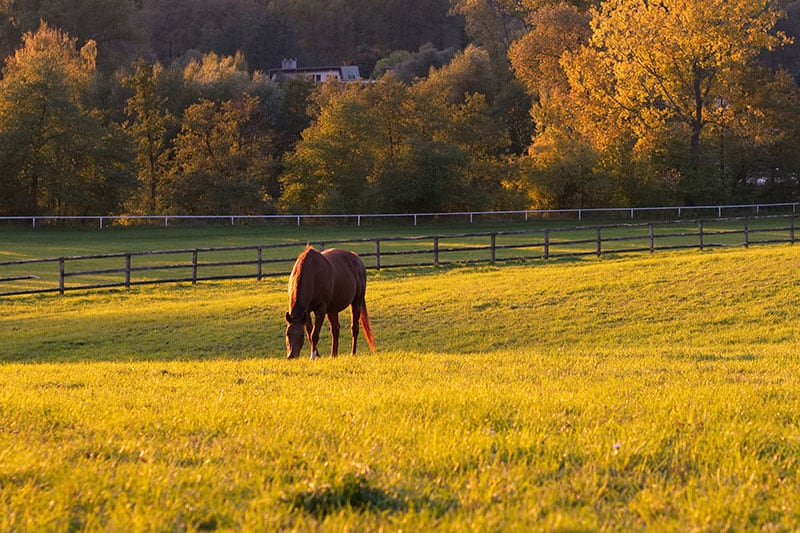 Transitioning Your Horse to Outdoor Living