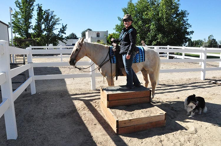 HORSE MOUNTING BLOCK STEPS