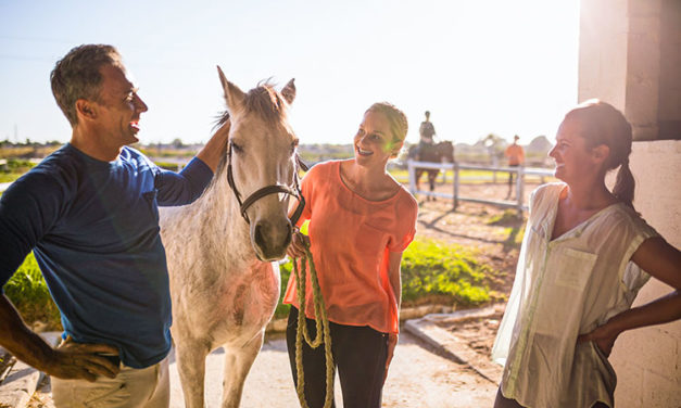 Getting to Know Your New Horse