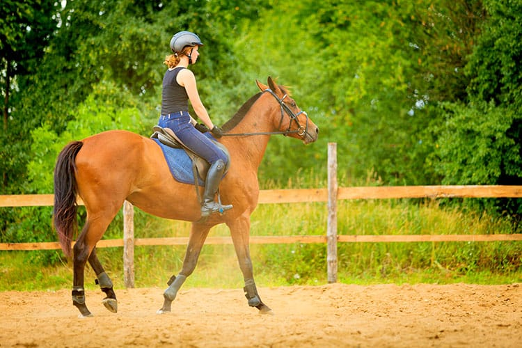 Behavior Test Reveals Owners Miss Signs of Lameness