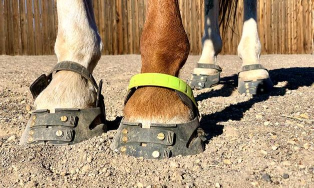 Transitioning a Horse to Barefoot for the Winter