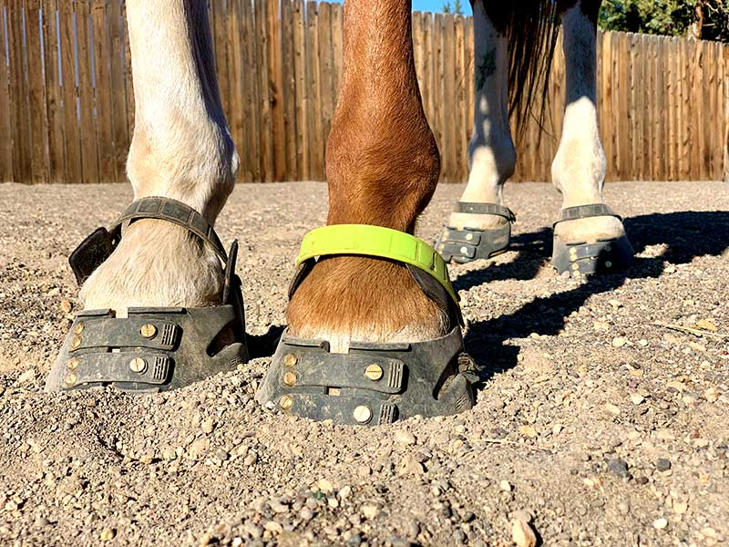 Product Review: Scoot Boots – The Horse