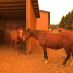 Vitamin E Might Provide Support For Horses in Stressful Situations