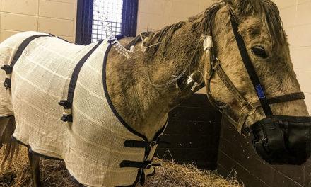 Equine Digestive Dilemmas
