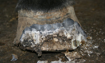 Demystifying Fungal Infections of the Equine Hoof