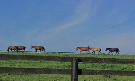 UK Launches Senior Horse Survey