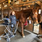 Not All Equine Heart Murmurs Are Created Equal