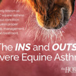 The Ins and Outs of Severe Equine Asthma