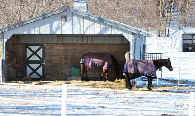 Study: Blanketed Horses Eat Less Hay