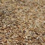 Study: Add Chopped Forage to Feed to Prolong Horses' Meals