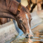 7 Dietary Deficiencies in Horses