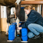 Why Not MRI for Your Equine Veterinary Practice?