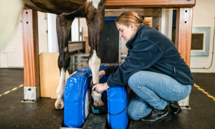 A Fresh Look at the Causes of Navicular Disease