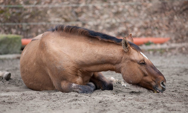 What You Need to Know About Colic in Horses